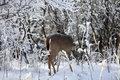 Deer in Frost print