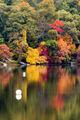 New Endgland Fall Colors print