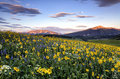 Spring in Crested Butte print