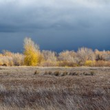 Pocatello, Idaho, limited edition, Scott Papek, images, storm, blowing, contrast, sky, dead grass, fall, leaves,