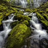 photographed, springs, Proxy Creek, mosses, forest, oregon