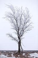 Nebraska, Tree,