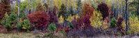 Fall, Wisconsin, trees