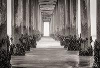 La Jolla, San Diego, ocean,