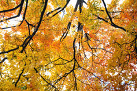 Fall in Nebraska City