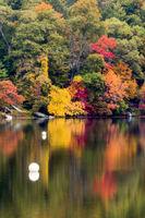 New Endgland Fall Colors