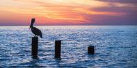 Old Naple Pier sunset