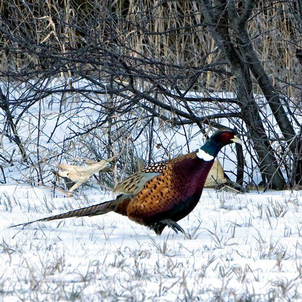 South Dakota,hunt, photo
