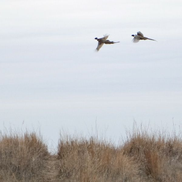 South Dakota 2010