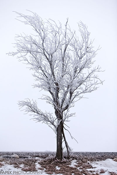 Nebraska, Tree,, photo