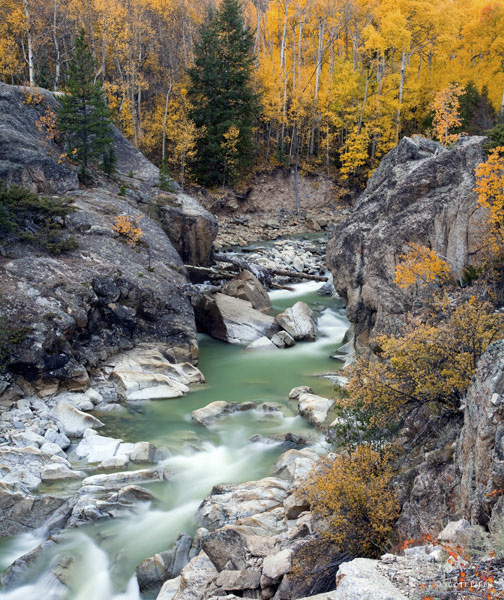 """Gold Rush"" was taken October 2011 in Aspen, Colorado. The combination of all the things I like to photograph. Color..."