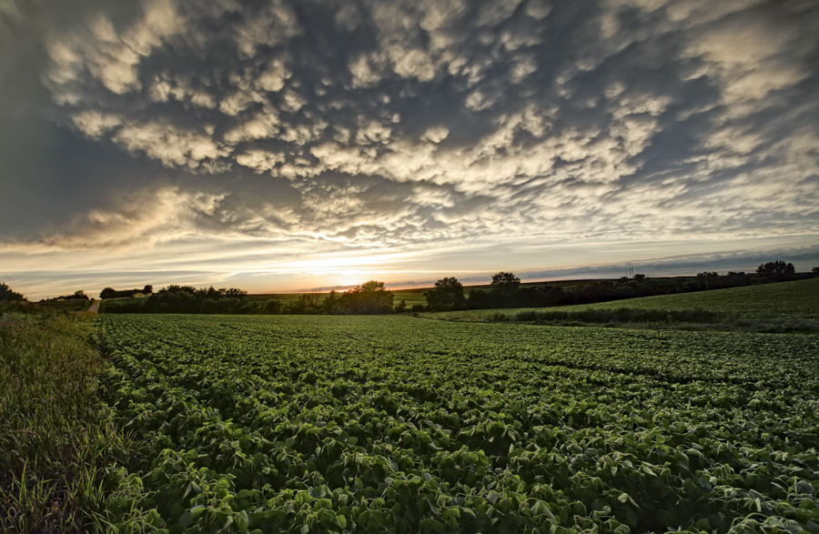 2014 Nebraska Calendar, storm, over, crops, bean, filed, gretna, omaha, photo