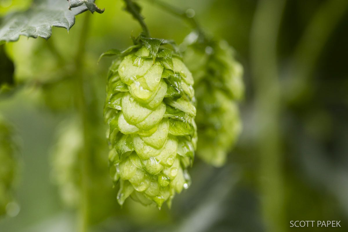45% off any hop picture. Please enter lovehops in the discount code in the shopping cart.