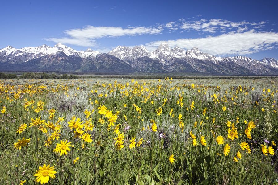 Colorado, Jackson Hole, Yellowstone