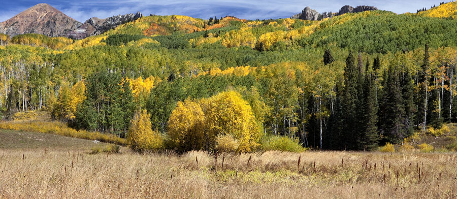 Colorado, Fall Colors, Trees, Aspen,, photo