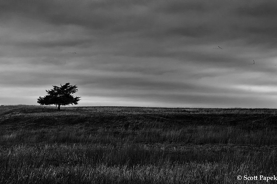 A solo tree in a wide open field in Nebraska. The perfect light makes this a beautiful Black and White image. You can hear the...